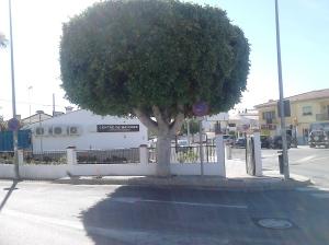 centro mayoresd